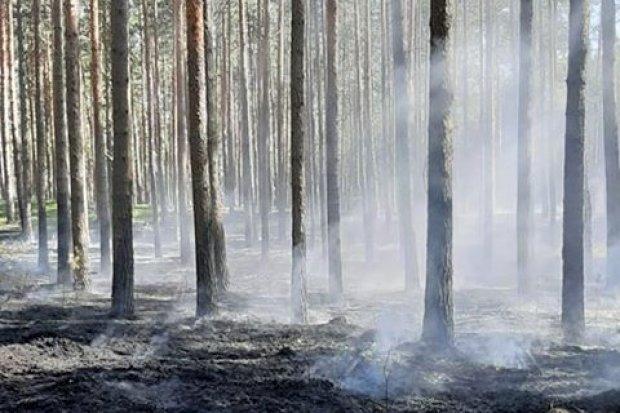Duży pożar lasu w Parowej. Zadysponowano samolot gaśniczy