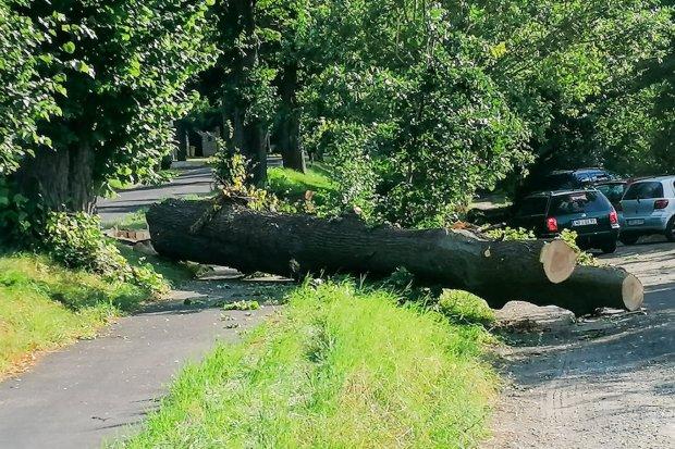 Ścięli drzewa, zastawili pułapkę na rowerzystów i przechodniów