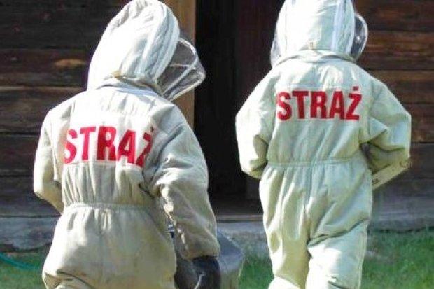 Kiedy strażacy usuwają rój niebezpiecznych owadów? – zasady interwencji