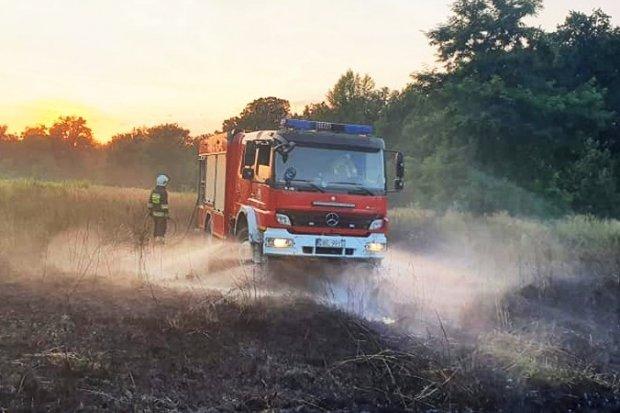 Pożar nieużytków rolnych w Łące
