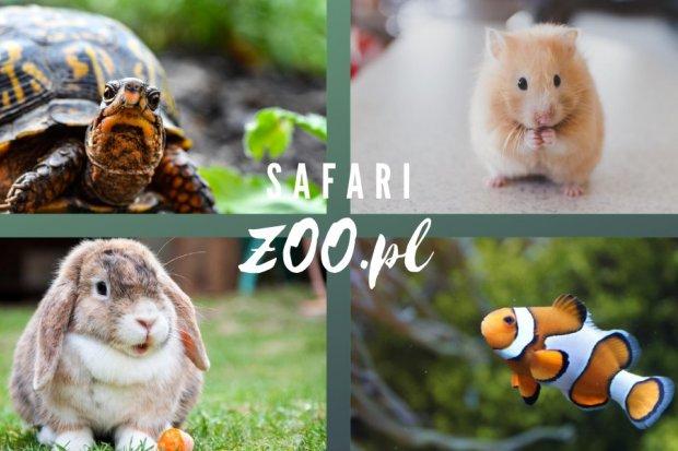 Sklep zoologiczny Safari, nagradzany przez klientów!