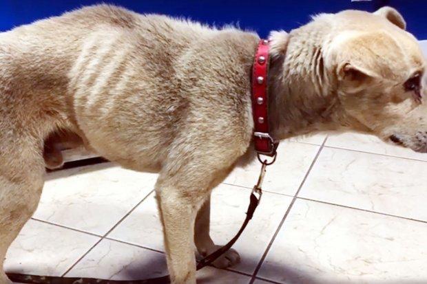 """""""Urzędniczka"""" znęcała się nad psem w Osiecznicy? Jest oświadczenie samorządu"""