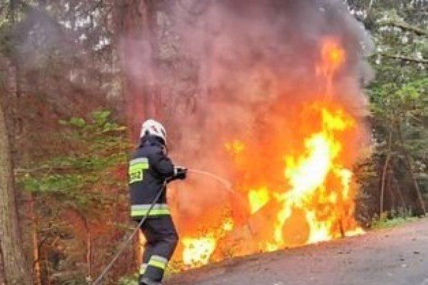 Pijany kierowca wjechał w pieszych, a potem w drzewo. Auto stanęło w ogniu