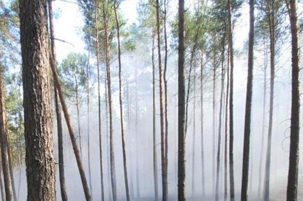 Pożar lasu w gminie Osiecznica. Zadysponowano samolot gaśniczy