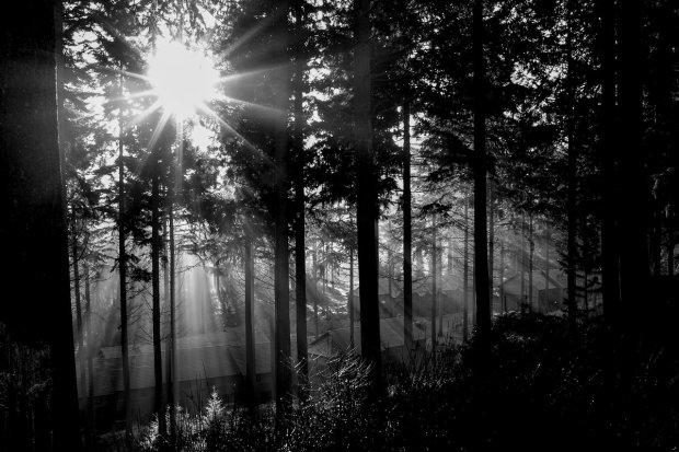 Samosąd w lesie. Złodziej pobity