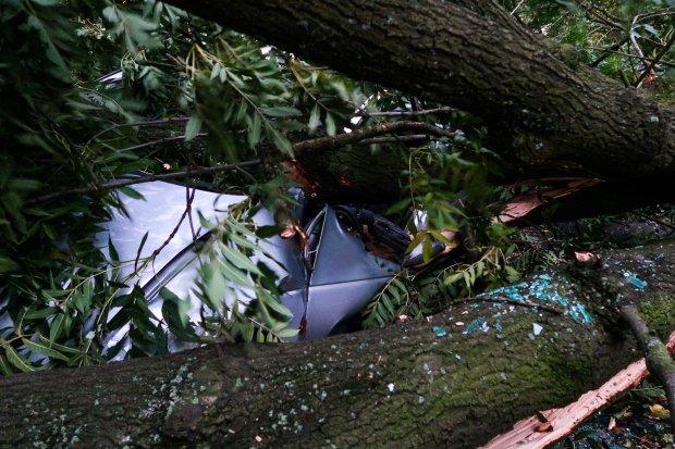 Cztery samochody przygniecione przez drzewo przy ul. Sądowej