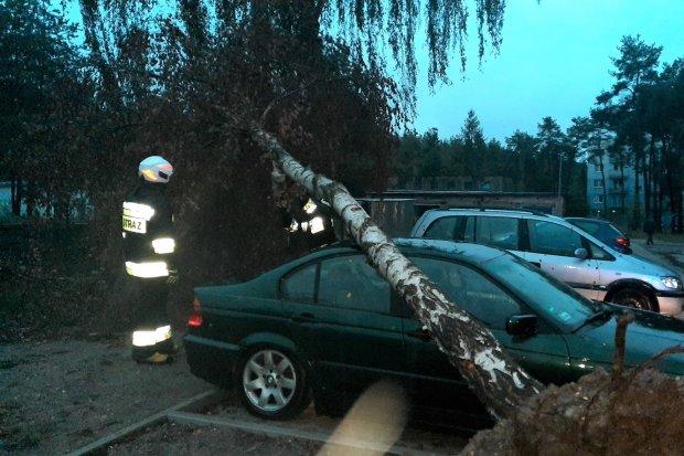 Brzoza spadła na samochód w Szczytnicy