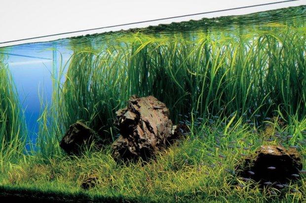 Akwarium – oryginalna ozdoba do domu