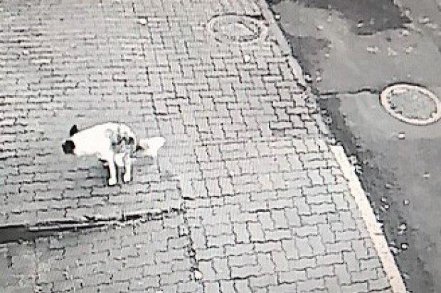 Pies zrobił kupę, właścicielka czworonoga dostała mandat