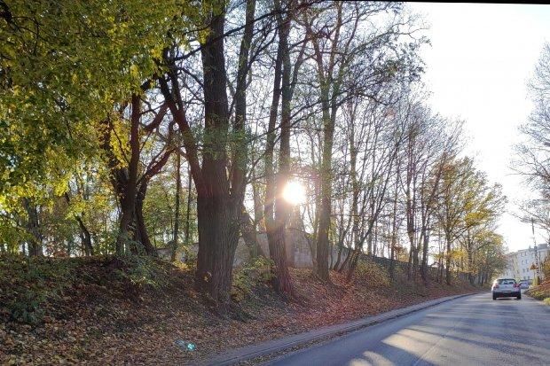 Wycinka drzew na i przy cmentarzu na Lubańskiej