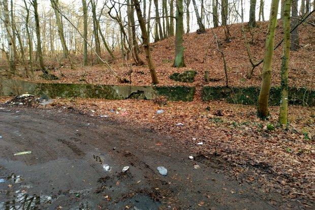 Lasek za byłym POM-em też należy do miasta i mógłby być zagospodarowany