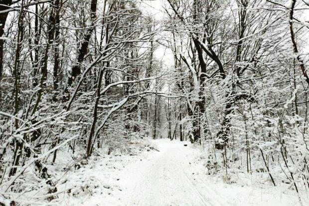 Korzystajcie ze spacerów – tak piękna zima skończy się prawdopodobnie w poniedziałek