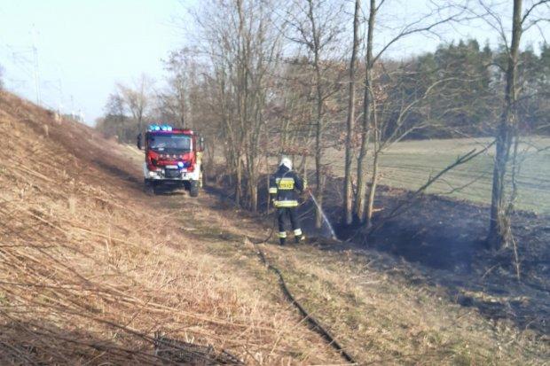 Kolejny pożar traw, tym razem w Kraśniku