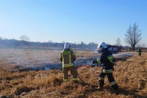 Plaga pożarów traw. Kolejna akcja w gminie Gromadka
