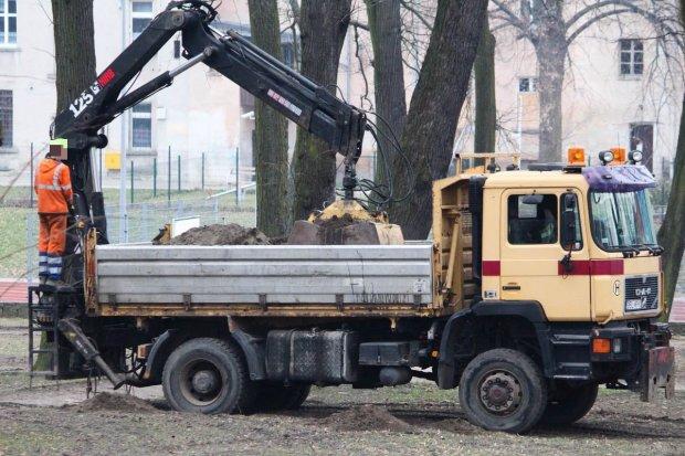 Wycinają chore drzewa w parku przy Obrońców Helu