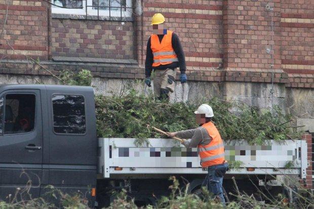 Wycinka drzew na terenie szpitala w Bolesławcu. Wiemy, jaki jest jej cel