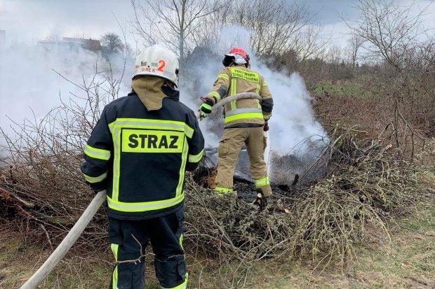 """Dwa pożary w gminie Nowogrodziec i... akcja """"Kot"""""""