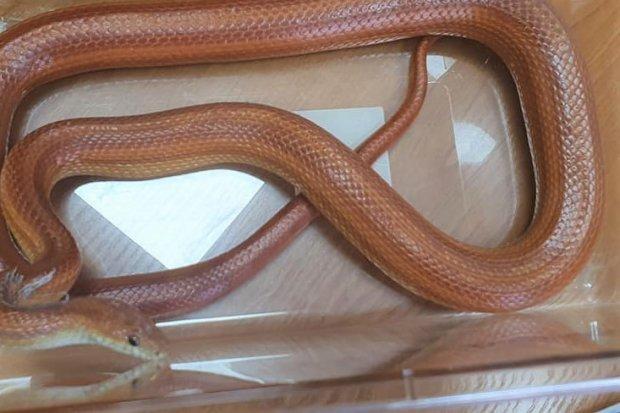 Ponadpółtorametrowy wąż w… łazience. Właściciel ukarany mandatem
