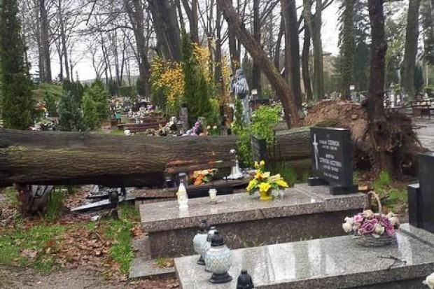 Zniszczone groby na cmentarzu w Bolesławcu