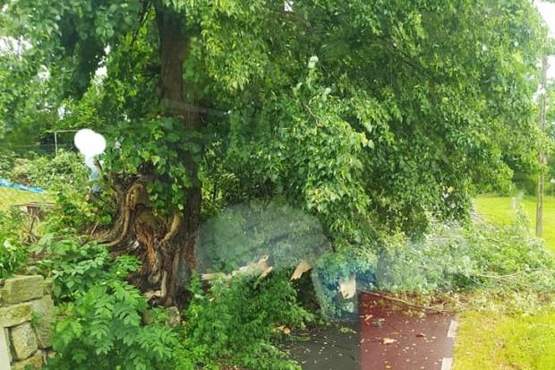 Nawałnica nad Tomaszowem Bolesławieckim: zerwany dach, połamane drzewa