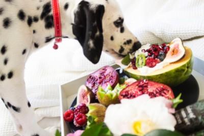 Najlepsza karma dla psa, czyli jaka? O nowych formułach na rynku karm