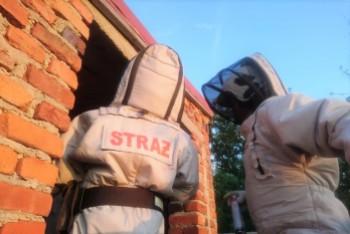 Strażacy kontra owady błonkoskrzydłe