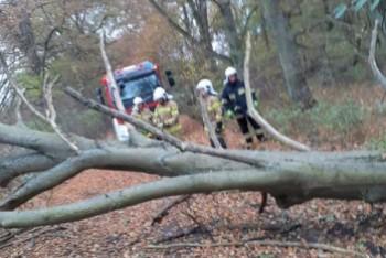 Kolejne powalone drzewo. Interweniowali strażacy