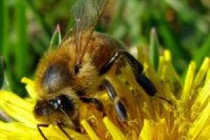 Pszczoły w obiektywie. Rusza konkurs