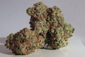 Kilkaset działek marihuany przechwycone. 28-latek zatrzymany