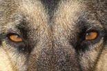 Jest problem z agresywnymi psami