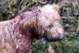 Tragicznie zamęczony pies