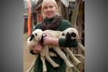 Nowo narodzone jagnięta w Naszym Zoo