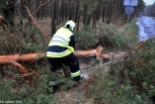 Wichura: 50 drzew połamanych i prawie 20 budynków uszkodzonych