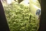 W sypialni uprawiał… marihuanę