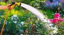 Niepodzielna władza węży ogrodowych w kategorii nawadniania?