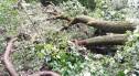 Przygnębiający widok w lesie przy ulicy Piastów. Najbardziej ucierpiała Aleja Przyleśna (Lipowa)