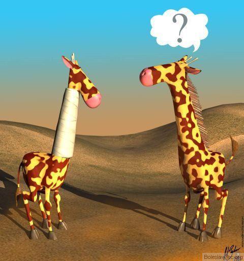 Żyrafy :)