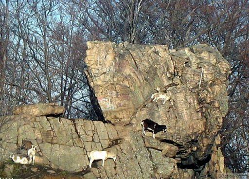 Kozice koło Karpacza