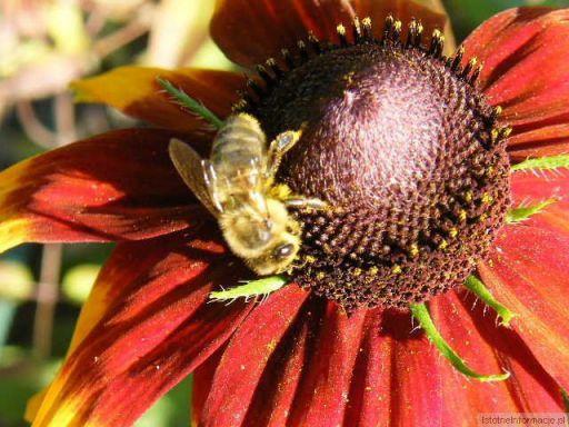 Kwiatuszek i jej Gość