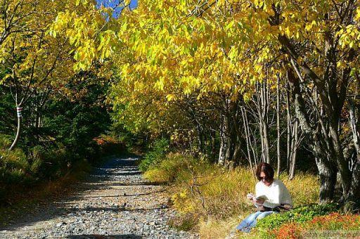 Poezją jest jesień