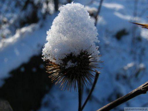 Śniegowa czapeczka