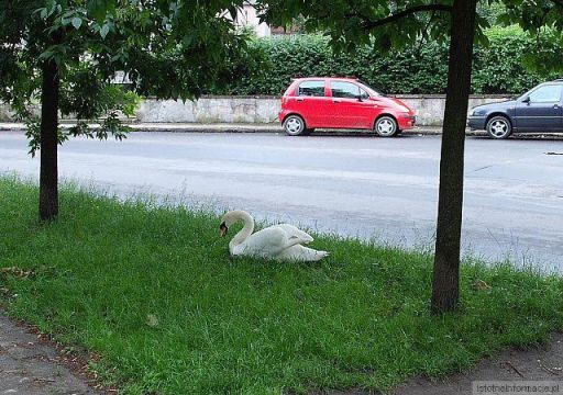 Smaczna trawa