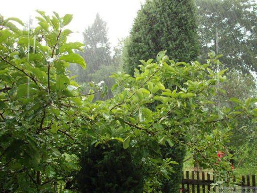 Deszczowe lato.