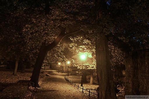 Nocą w parku