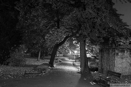 Noc w parku I