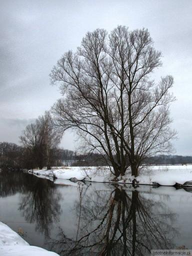 Drzewo nad Kwisą