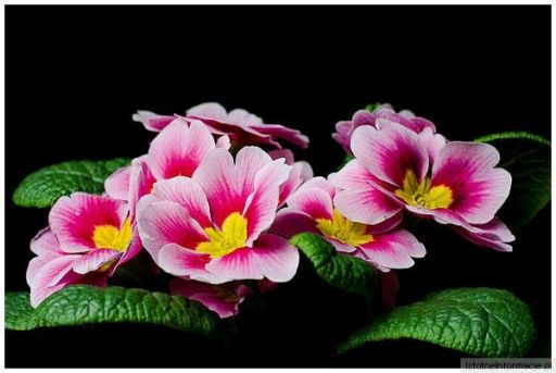 Kwiatek...