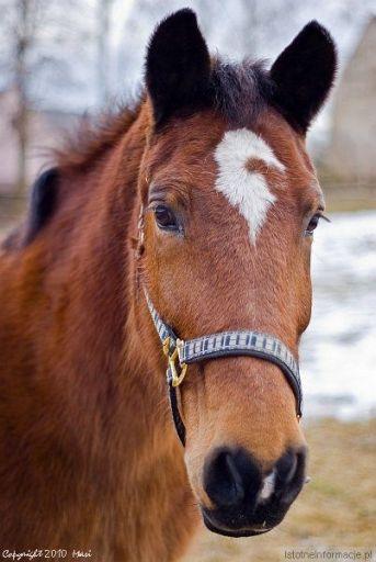 Koń jaki jest -> każdy widzi... ;-)