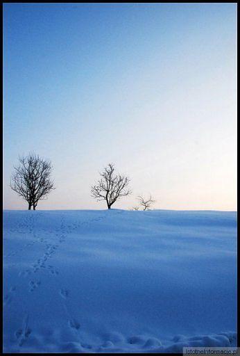 Puzzle zimowe