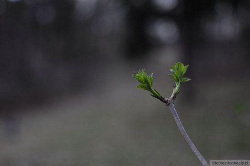 Wiosna ach to ty